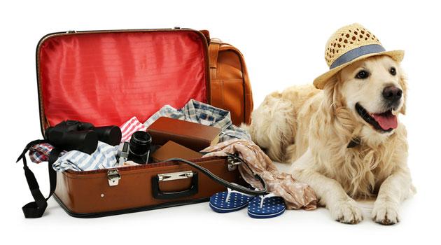 Dog suitcases