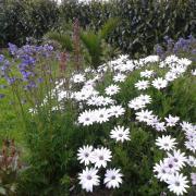 Ty Morzigell - Le gîte et le jardin